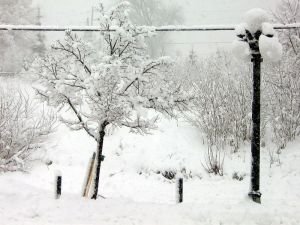 800px-Tree_and_street_lamp_in_winter